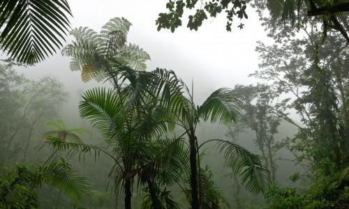Треккинг в республике Конго