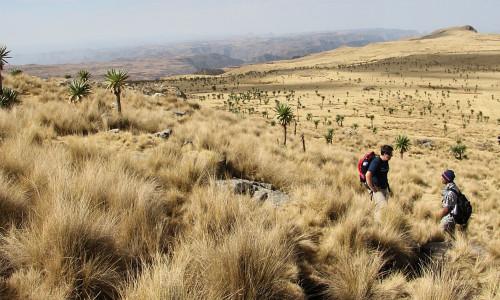 Треккинг в Эфиопии