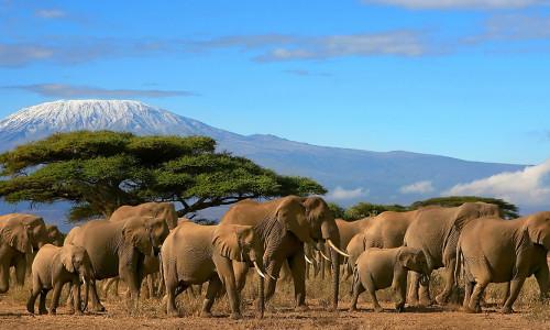 Треккинг в Танзании